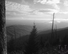 Clingman's Dome in the Great Smoky Mountains National Park, TN.