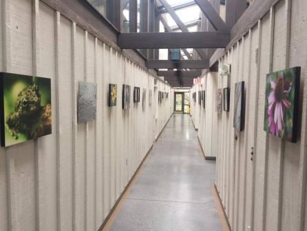 Ijam's Nature Center